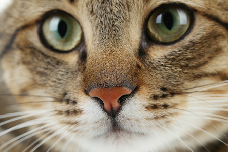 face close up: Beautiful cat face close up Stock Photo