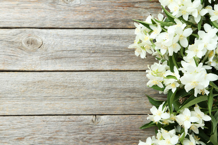 White flowers of jasmine on grey wooden background