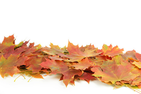 autumn leafs: Autumn leafs on white background