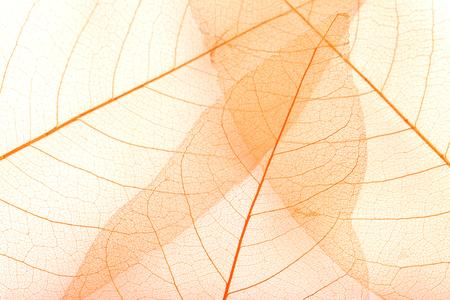 slight: Skeleton leafs background, close up