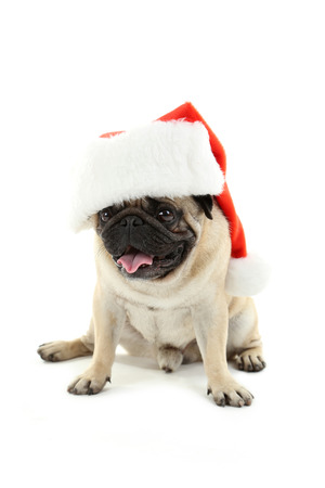 Funny pug dog with santa hat isolated on a white Stock Photo