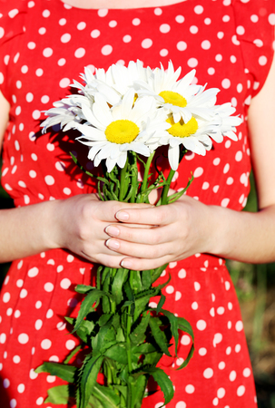 ourdoor: Woman holding bouquet of chamomile flowers, ourdoor Stock Photo