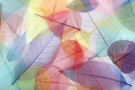 Skeleton Blätter Hintergrund, close up