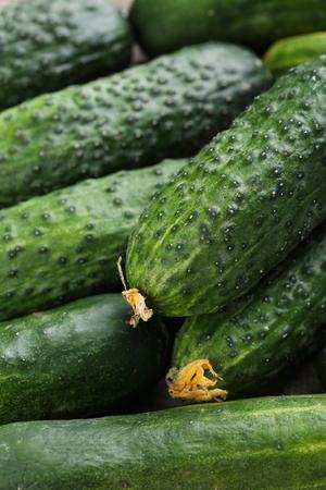 cuke: Fresh cucumbers background Stock Photo