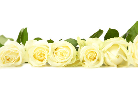 Bouquet of white roses on white background Standard-Bild