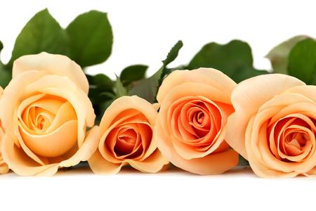 rosas naranjas: Ramo de rosas de color naranja sobre fondo blanco