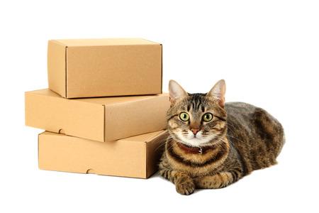 Lege kartondozen met kat die op een wit wordt geïsoleerd