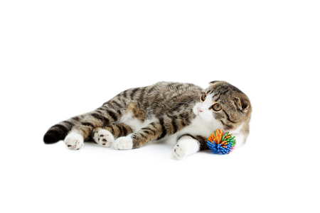 ball isolated: Beautiful cat isolated on a white