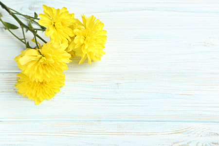 chrysanthemum: Yellow chrysanthemum flowers on a white wooden table Stock Photo