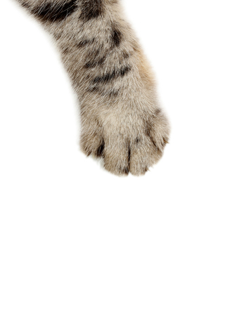 Cat paw on the white background