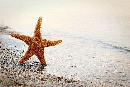 echinoderm: Starfish on a beach sand near water
