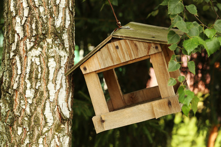 trough: Wooden trough for birds on a tree