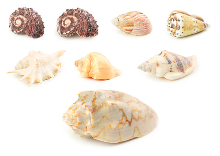 Sea shells isolated on a white, collage Stock Photo