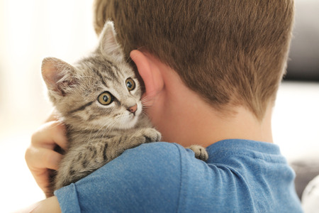 affectionate: Child with kitten on hands at home