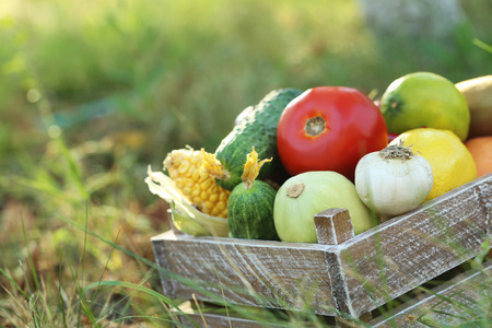 fruits in a basket: Ripe and tasty fruits and vegetables in basket on the grass