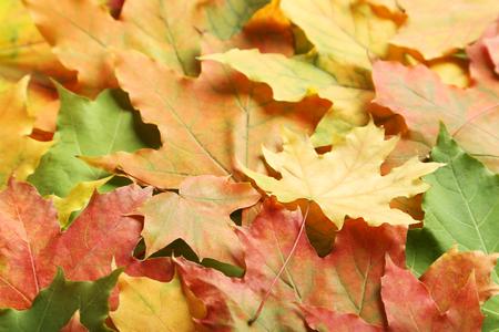 autumn leafs: Autumn leafs background