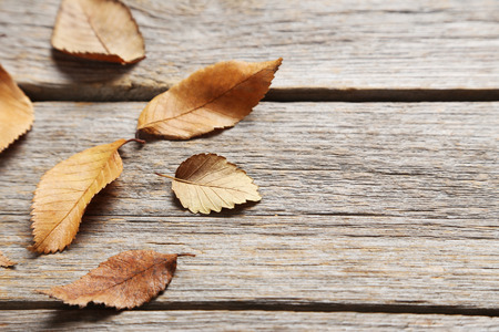 autumn leafs: Autumn leafs on grey wooden table Stock Photo