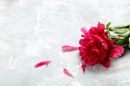 Red peony flowers on a grey background Stock Photo