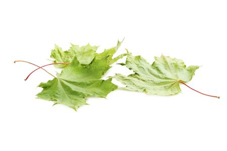 calendario octubre: las hojas del otoño aislados en fondo blanco