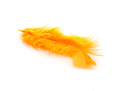 Feather isolated on a white Stock Photo