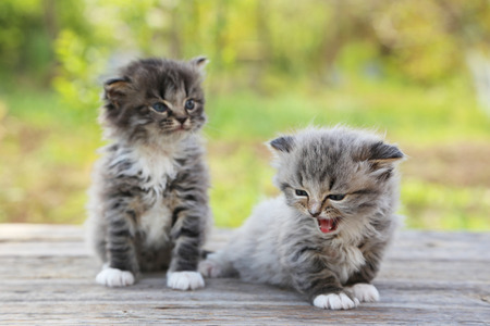 Small kittens on table outdoors