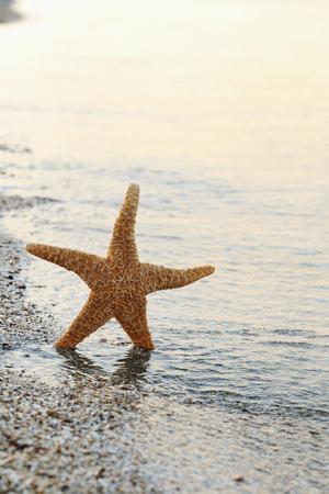 Starfish on a beach sand near water
