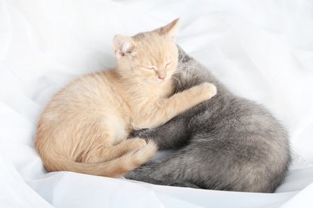 attentive: Ginger and grey kitten sleeping on white cloth