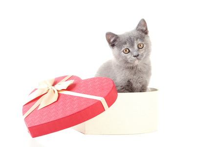 Grey kitten in heart gift box isolated on a white
