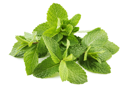 Fresh mint leafs isolated on white