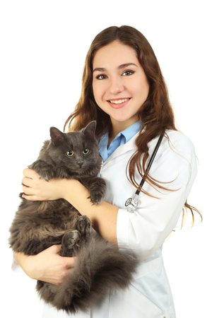 Young veterinarian holding grey cat on white background Stock Photo