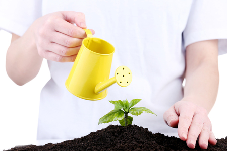 Female hands watering young green plant in the ground Banque d'images - 97596409
