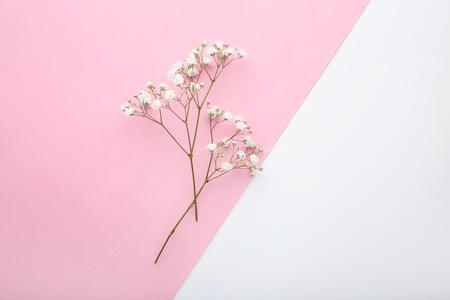 White gypsophila flowers on colorful background