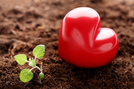 Young green plant in ground with red heart Stockfoto