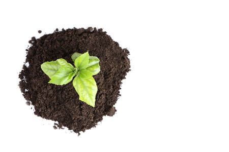 Young plant in ground on white background Reklamní fotografie
