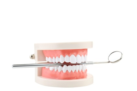 Teeth model with dental tool isolated on white background