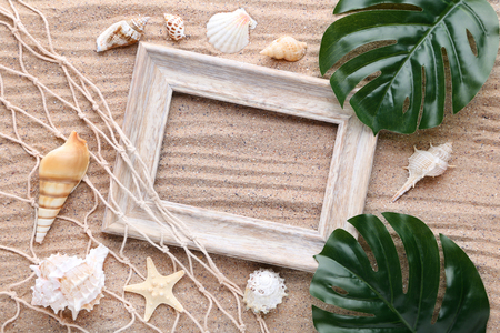 Seashells with wooden frame and green monstera leafs on beach sand