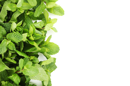Fresh mint leafs on white background