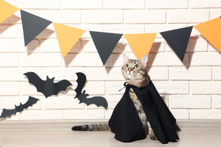 Grey cat in black cloak with paper bats on brick wall background