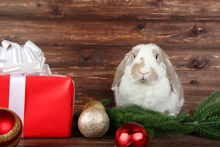 Beautiful rabbit with gift box and Christmas baubles on wooden table Stock Photo