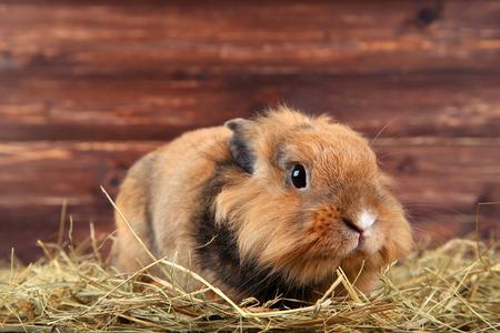 Brown beautiful rabbit with hay on wooden background Banco de Imagens