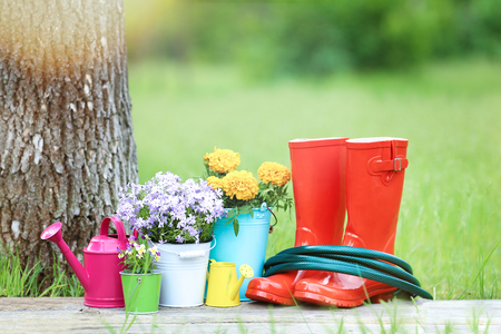 Rubber boots, green hose and flowers in buckets on wooden board Stock Photo