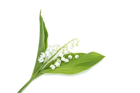 Lily of the valley flowers isolated on white background 免版税图像