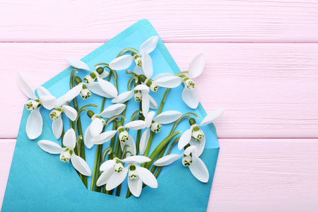 Snowdrop flowers in envelope on pink wooden table