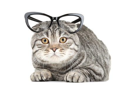 Cute cat with glasses isolated on white background