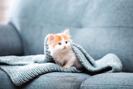 Cute kitten with scarf sitting on grey sofa
