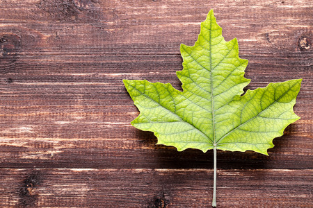 Green maple leaf on brown wooden table