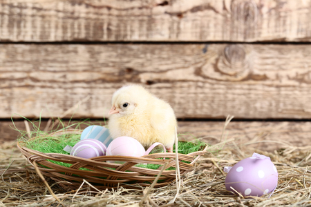 Little chick with easter eggs on wooden background Foto de archivo