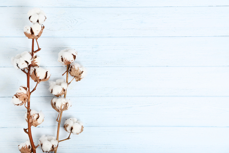 Tree branch with cotton flowers on wooden table Standard-Bild - 121071966