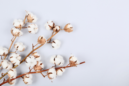 Cotton flowers on grey background Stock fotó - 121072012