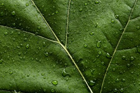 Background of green leaf with water drops Imagens